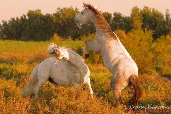 Vive les chevaux (2/3) mais calmez vous !!!