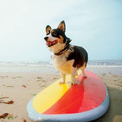 Un apprenti surfeur