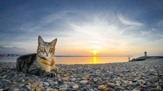 Un chat au bord de mer (3/3)
