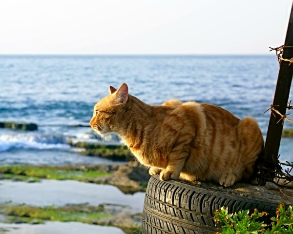 Un chat au bord de mer (2/3)