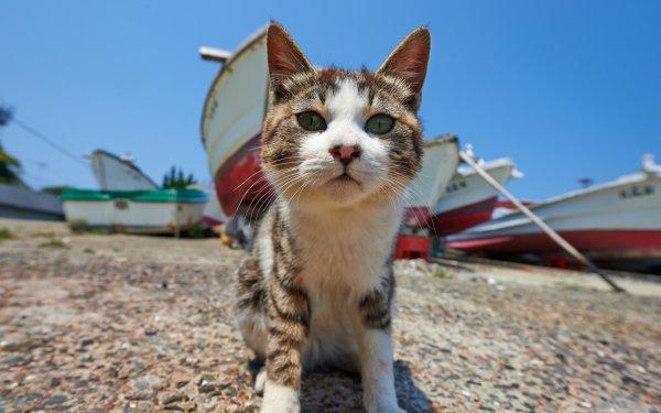 Un chat au bord de mer (1/3)