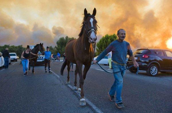Des chevaux sauver des flammes (Marseille 2016)