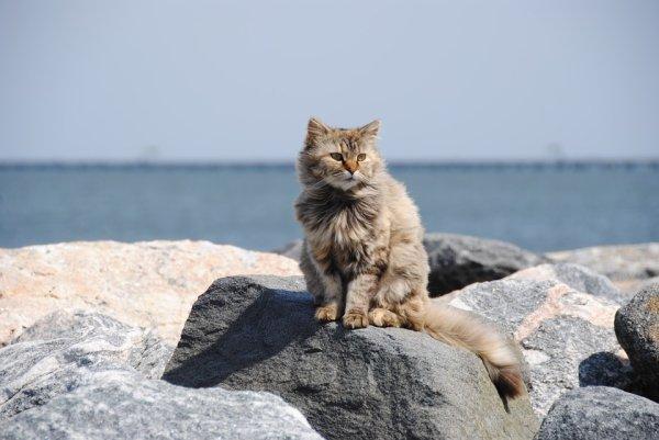 Un chat qui prolonge les vacances (1/3)
