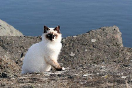 Un chat qui prolonge les vacances (2/3)