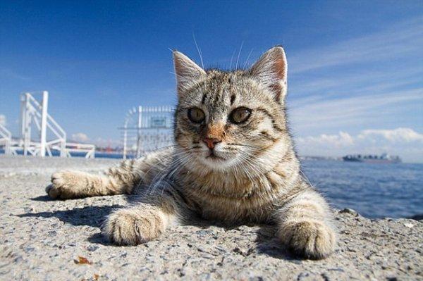 Un chat qui prolonge les vacances (3/3)
