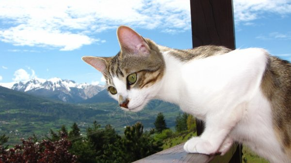 Un chat qui regarde ce qui se ramène