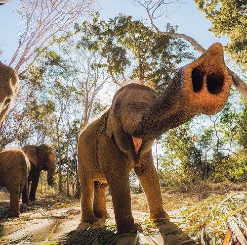 Un éléphanteau qui nous trompe