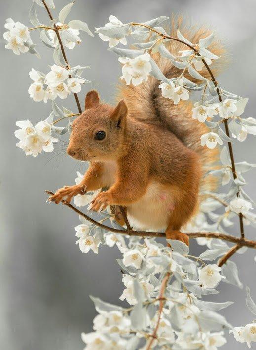 Un écureuil dans un arbre en fleur