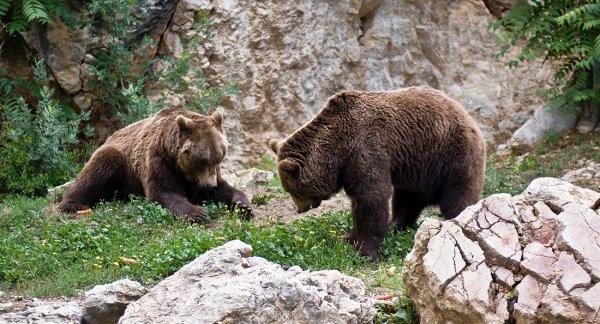 Un ours (3/3)
