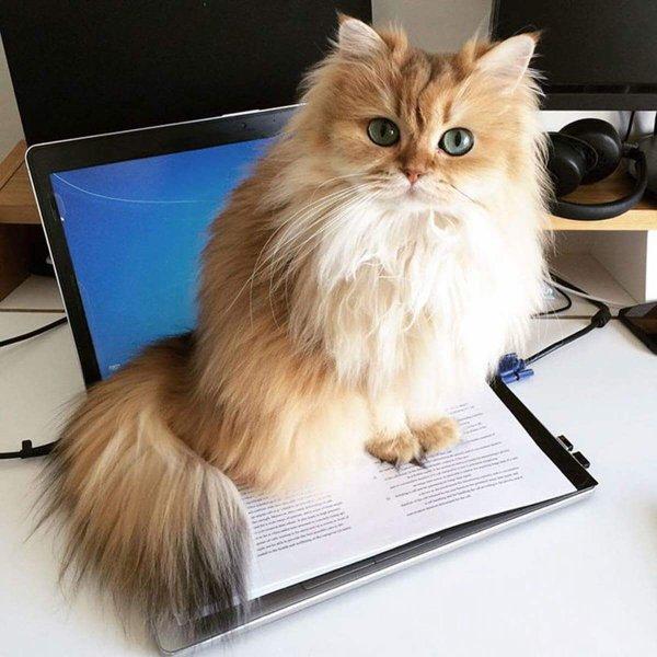 Les chats aiment aussi l'informatique