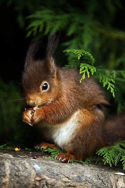 Un magnifique écureuil (1/2)