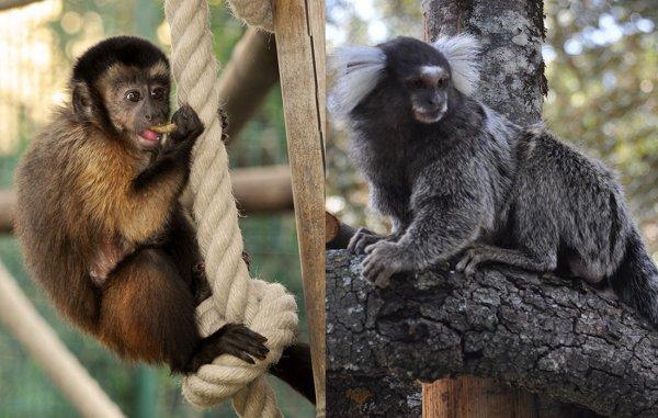 Deux beaux singes