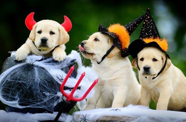 Joyeux Halloween 2016 (6/6)