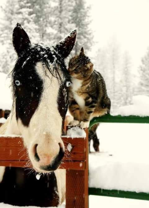 Un chat qui murmure à l'oreille d'un cheval