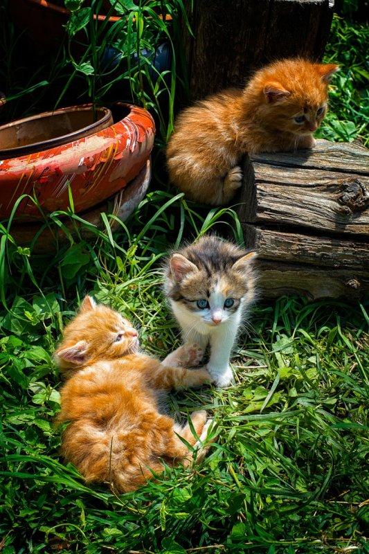 De bon chatons !!!