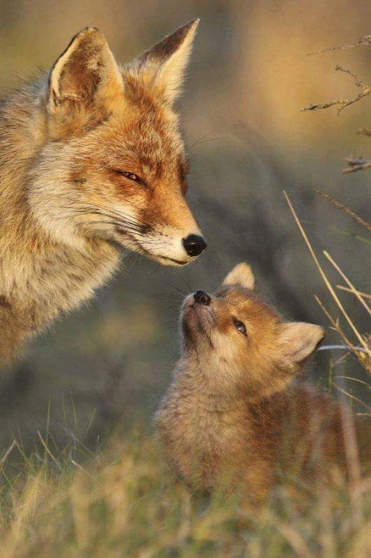 Qu'ils sont mignon ses deux renards