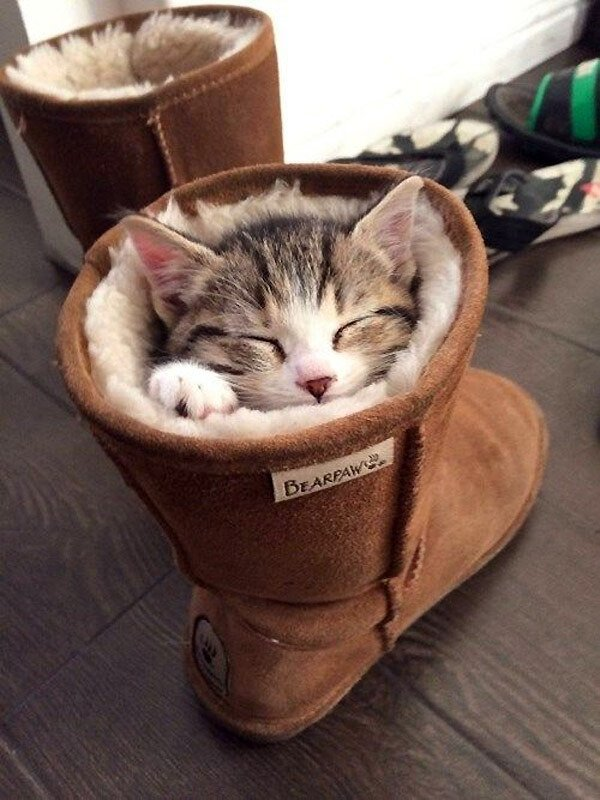 Un chat qui dort dans sa botte