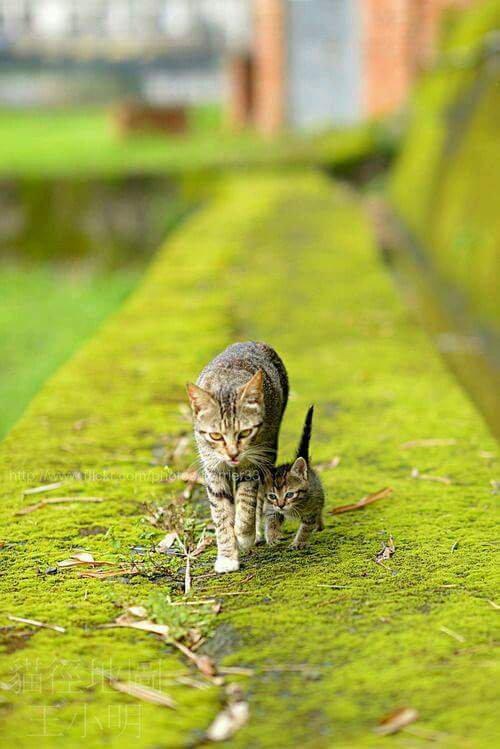 Deux très beaux chats