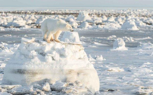 Cet ours domine le paysage