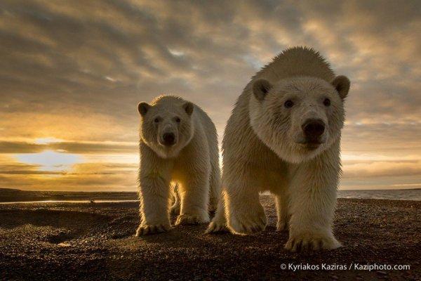 De très beaux ours