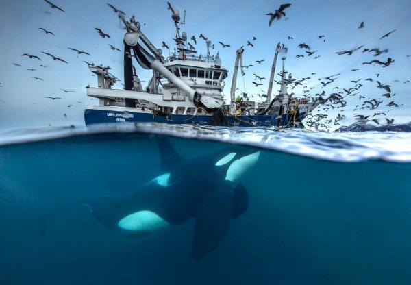 Laissez cette orque tranquille !!!