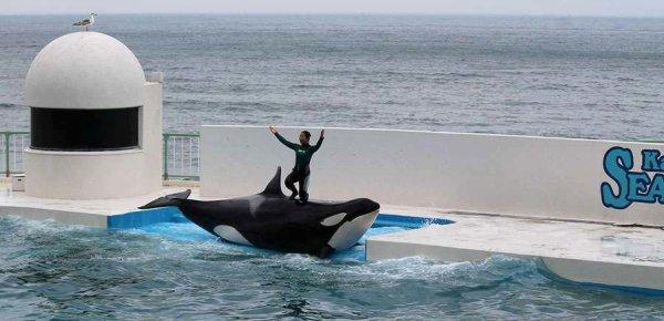 Cette orque devrait être en liberté !!!