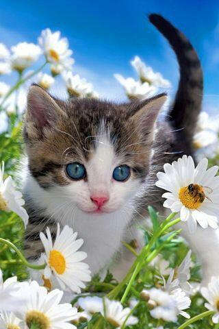 Un chat avec les fleurs