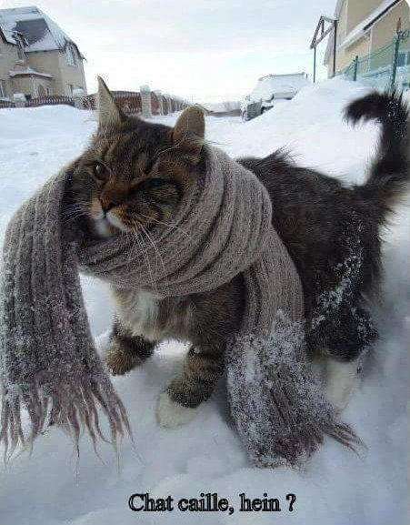 Chat caille