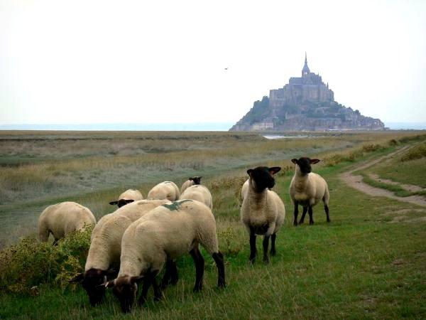 Le Mont Saint Michel et les animaux (2/3)