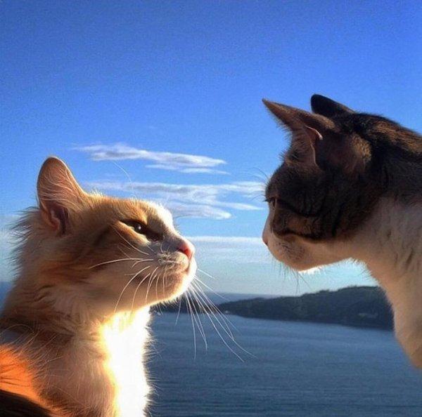 Des chats amoureux