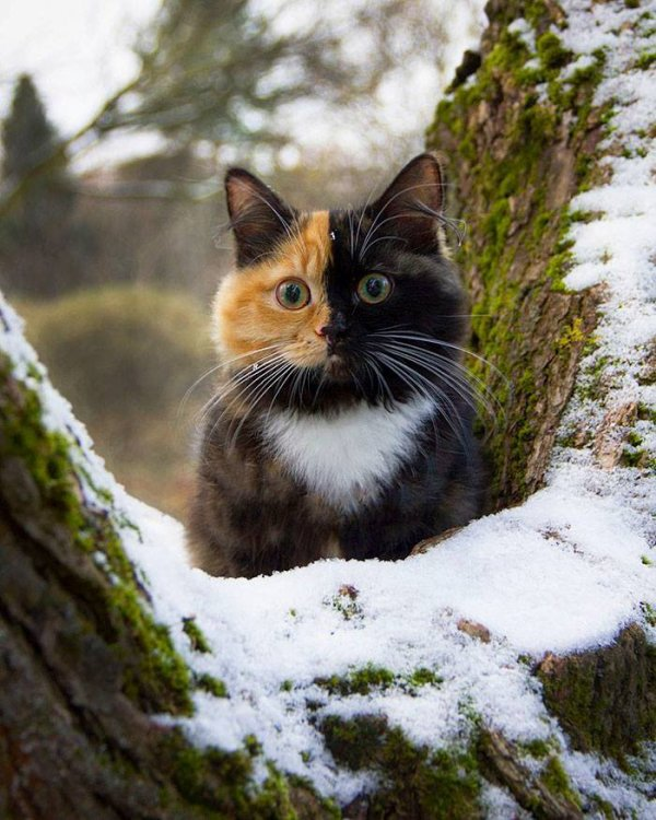 Un chat multicolores