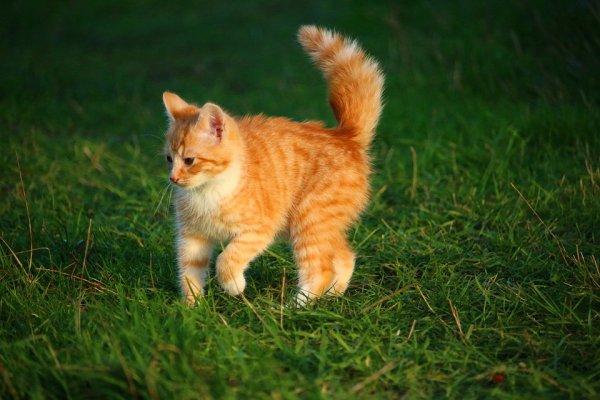 Un beau chat roux (3/3)