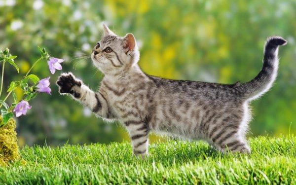 Un chat dans la nature (2/5)