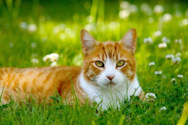 Un chat dans la nature (3/5)
