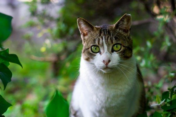 Un chat dans la nature (5/5)