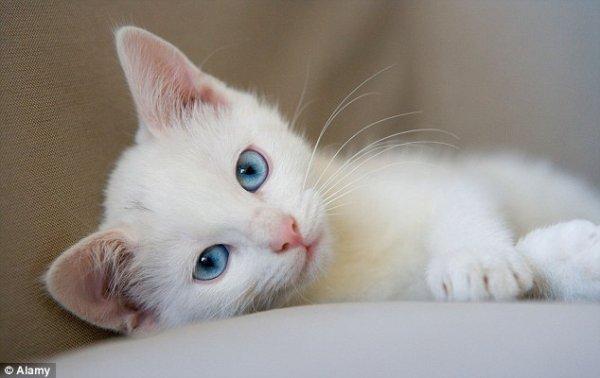 Un chat tout blanc (1/4)