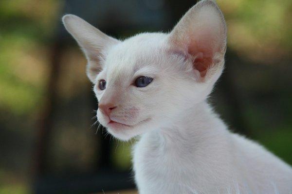 Un chat tout blanc (2/4)