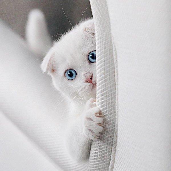 Un chat tout blanc (3/4)
