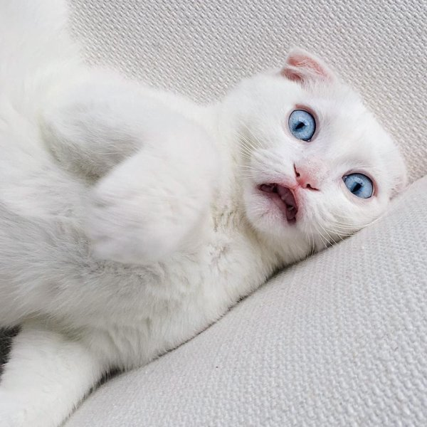 Un chat tout blanc (4/4)