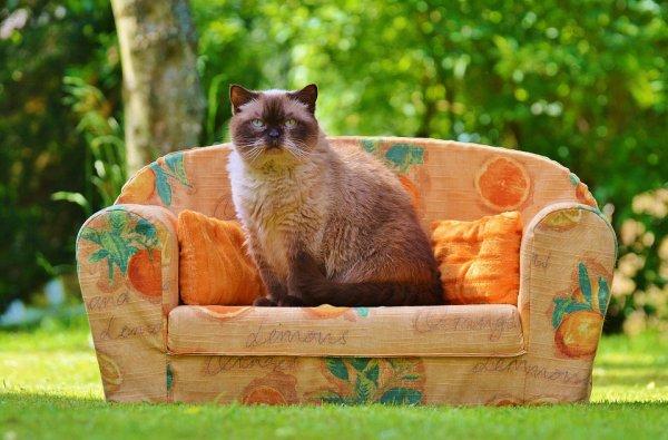 Un chat sur le divan
