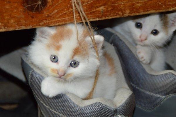 Encore un beau chat (1/5)