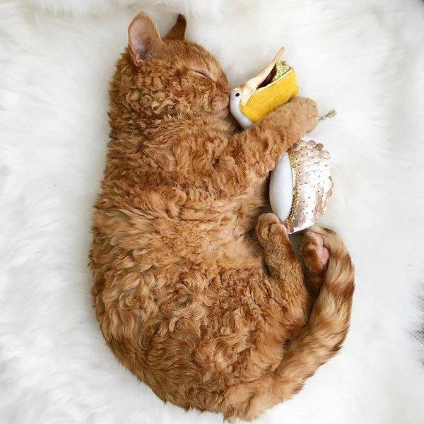 Un chat avec son doudou