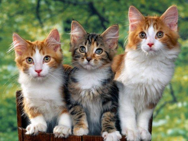 Trois jeunes chats