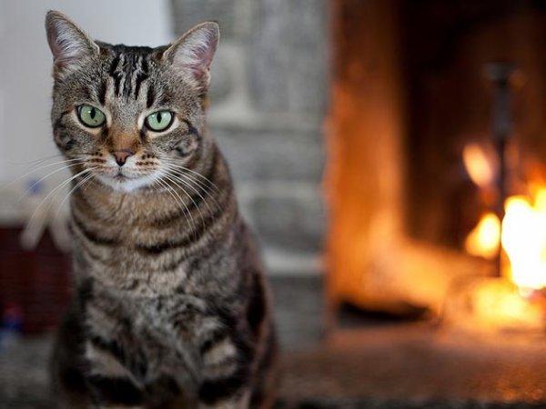 Un chat au coin de la cheminée