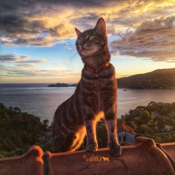 Un chat dans un somptueux paysage (1/2)