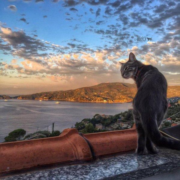 Un chat dans un somptueux paysage (2/2)