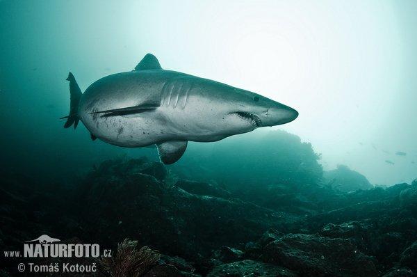Un beau requin dans l'océan (3/4)