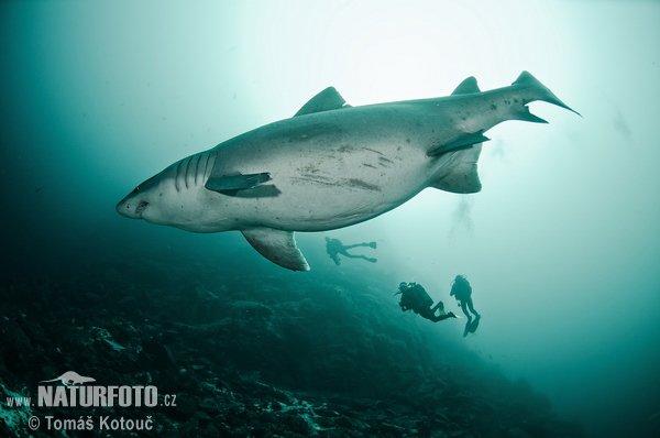Un beau requin dans l'océan (4/4)