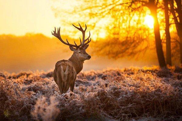 Un magnifique cerf