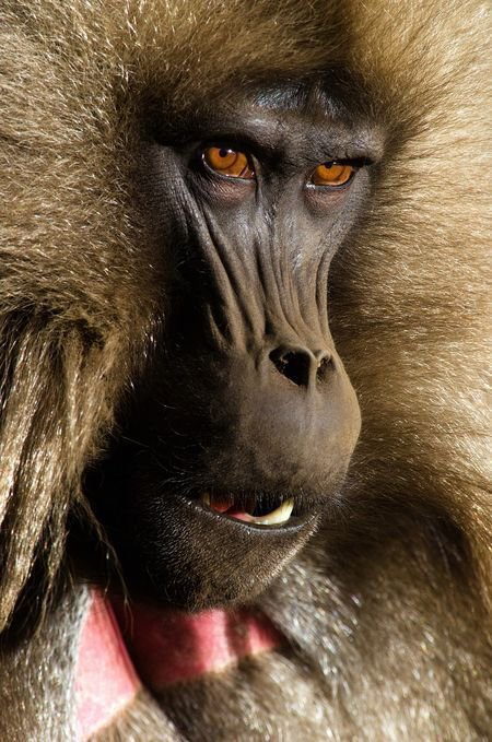 Oh le singe !!!